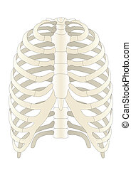 huesos, vector, humano, skelton