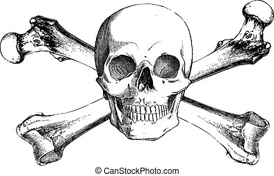 huesos, vendimia, vector, cruz, cráneo