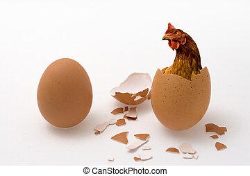 huevo de pollo, o