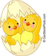 huevo, tramado, pollos, dos, uno