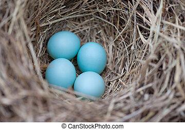 huevos, azulejo