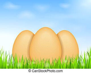 huevos, en, pasto o césped
