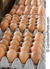 huevos, establo, venta, mercado