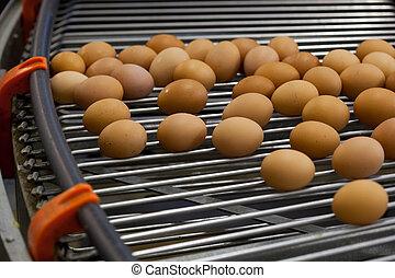 huevos, línea de montaje