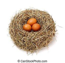 huevos, marrón, nido, pollo