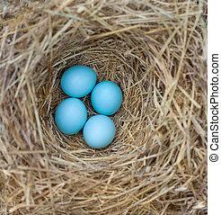 huevos, nido, azulejo