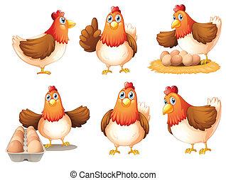 huevos, pollos