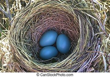 huevos, robin