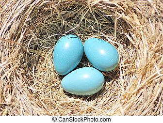 huevos, tres, robin