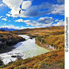 Huge Andean condors flying over water