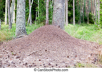 Huge anthill in forest - There is a huge anthill in the...