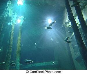 Huge aquariums in zoo full of fish