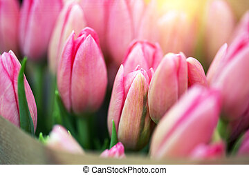 huge bouquet of pink tulips in amsterdam
