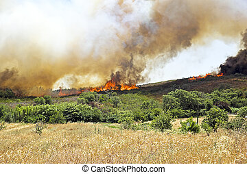 Huge bush fire at the westcoast in Portugal