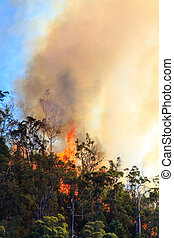 Huge Bushfire Flames - Tall flames as tall as the trees from...