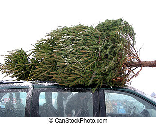 Huge Christmas tree tied to the roof on a minivan
