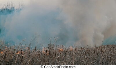 Huge column of smoke from an elemental fire in the forest...