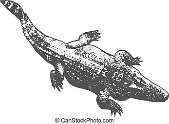 Huge crocodile thick, black contour on white background. Top...