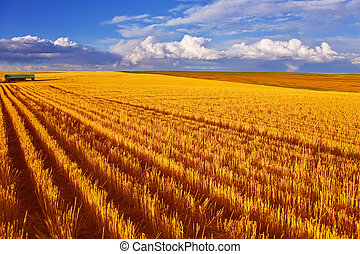 Huge field in state Montana after harvesting