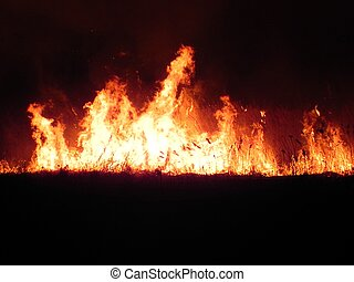 fire in the meadow at night - huge fire in the meadow at...