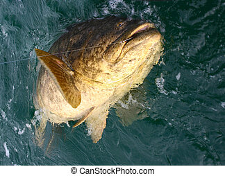 Huge Fish - A huge fish being caught.