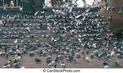 Huge Flock of Pigeons on the Steps at the City Street Eat...
