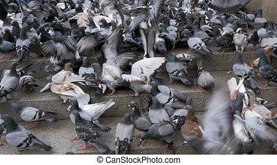 Huge Flock of Pigeons Take off on the City Street. Slow Motion