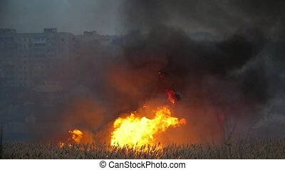 Huge forks of fire devouring bulrush cattails on the Dnipro...
