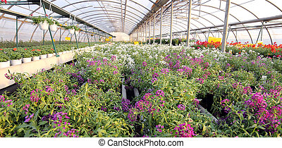 greenhouse with a lot of flowers and plants for sale in the spri