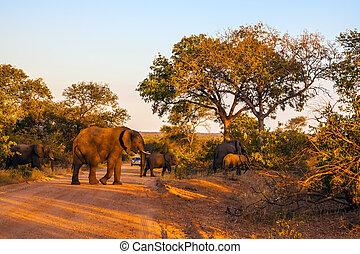 Huge herd of elephants