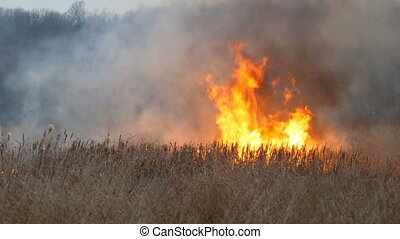 Huge high flame of a storm fire that burns dry grass and bushes in the forest steppe. Fire in nature, natural disaster