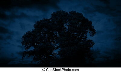 Huge Old Tree Swaying At Night - Big old tree sways in the...