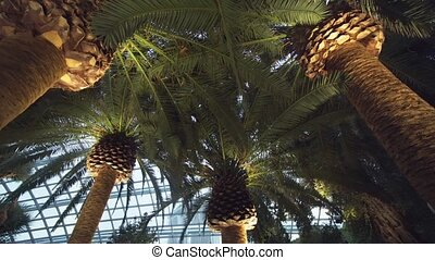 Huge Palm Trees inside the Flower Dome. 4k footage 2160p - ...