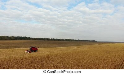 huge red combine in the field corn in a nice blue sunny day. aerial shot
