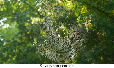 Huge round web on a tree in the forest. On it a spider ...