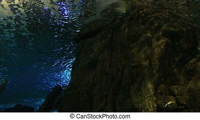 Huge saltwater aquarium with its life. - Huge saltwater...