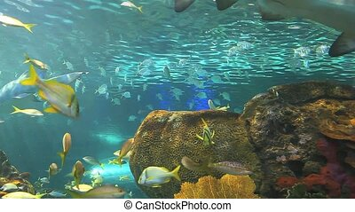 Huge schools of tropical fish swimming in a coral reef