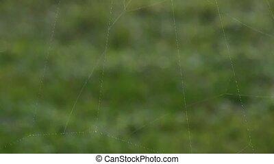 Huge spider web - Tilt move across a huge spider web dotted ...