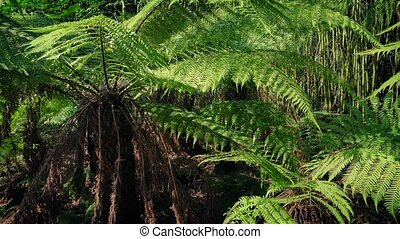 Huge Tropical Ferns In The Sun - Large fern plants in the...