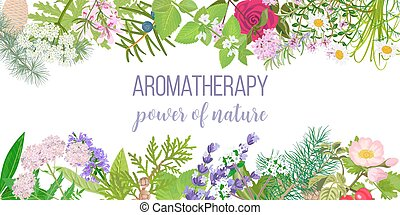 huile, carte, texte, aromatherapy., plants., cadre, ...