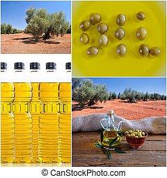 huile d'olive, composition.