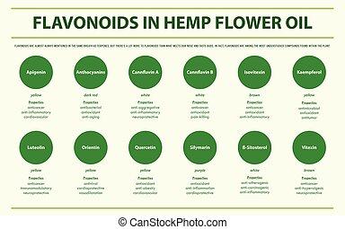 huile, infographic, fleur, flavonoids, horizontal, chanvre