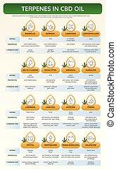 huile, infographic, terpenes, manuel, cbd, vertical