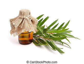 huile, melaleuca, twigs., essentiel, pharmaceutique, bouteille