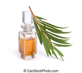 huile, (tea, essentiel, melaleluca, twig., tree)