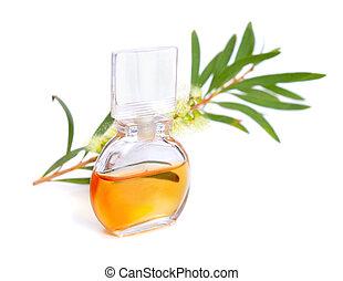 huile, (tea, melaleluca, flowers., tree), brindille, essentiel