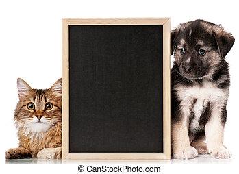 huisdieren, met, bord
