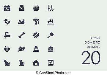 huiselijk, set, dieren, iconen
