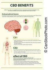humain, cbd, infographic, vertical, avantages
