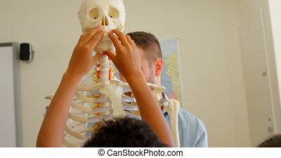 humain, classe, école, mâle, caucasien, squelette, modèle, 4k, fixation, prof